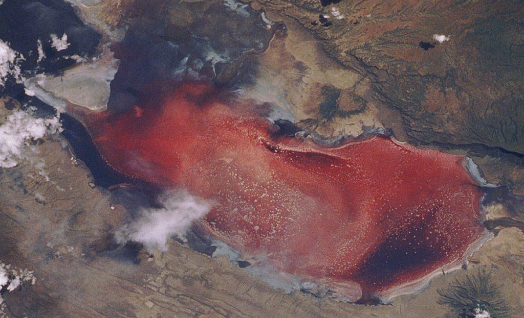 lake-natron-red-algae3